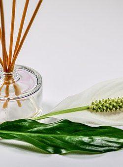scent-1059419__340