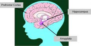 brain ecmhc.org